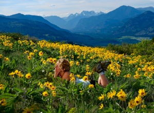 Methow Valley Balsamroot flowers